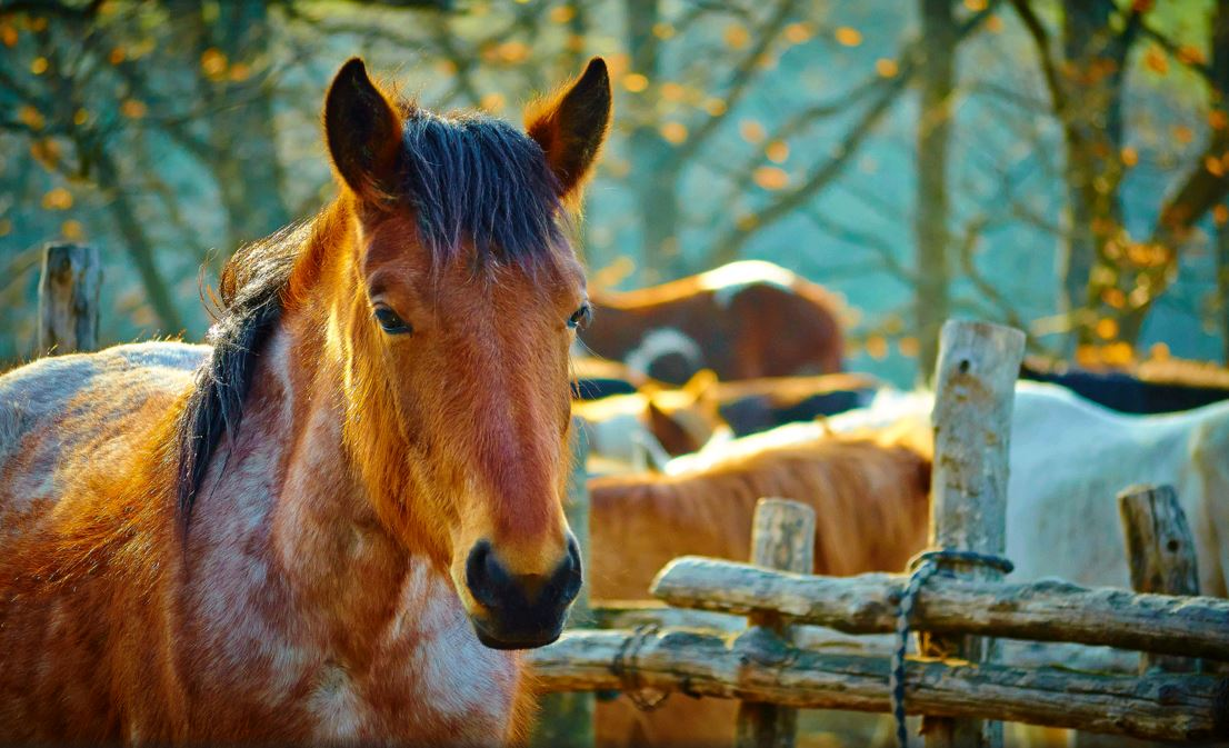 Image result for Why you should consider equine liability insurance